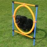 Set de Salto Circular económico para Agility - Set de Salto Circular para Agility, diseñado con un aro y cuatro postes formando un cuadrado. La altura del aro es regulable. El aro cede al tocarlo, de tal modo que no existe peligro de lesionarse.